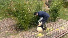 《精彩一刻》快学!妈妈教你爬树_熊猫频道_熊猫直播