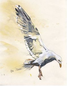 Image result for water color  sea gulls  vector illustration