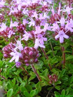 Healing Herbs, Survival, Nature, Plants, Gardening, Magick, Naturaleza, Lawn And Garden, Plant