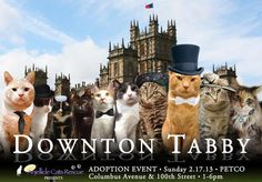 """Anjellicle Cats Rescue hosted a """"Downton Abbey""""-themed cat adoption event at a local pet store."""