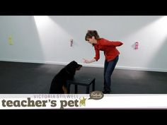 Teaching the 'Leave It' Cue | Teacher's Pet With Victoria Stilwell