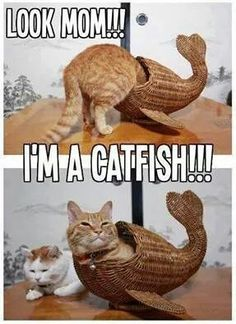To catch the fish, you must first become the fish funny memes meme humor funny memes animal memes cat memes Funny Animal Jokes, Funny Cat Memes, Cute Funny Animals, Cute Baby Animals, Funniest Memes, Memes Humor, Funny Humor, Animal Humor, Funny Captions