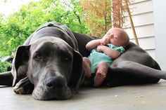 30 Hunde, die dem Kind der Familie treu ergeben sind. Bei Nr 15 kriegt man fast feuchte Augen.