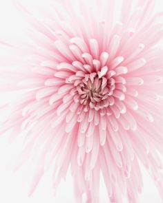 Pink Carousel-Flower Photography