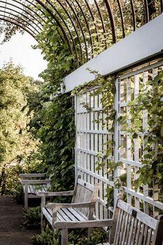 39 Best DIY Garden Trellis Ideas To Consider[Listicles] Cattle Panel Trellis, Arch Trellis, Trellis Ideas, Clematis Trellis, Garden Trellis, Fence Garden, Garden Plants, Willow Garden, Vertical Planter