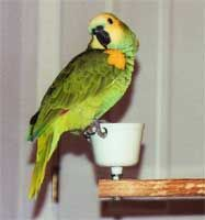 Water bowls should be placed so that they're above perch level to prevent contamination by fecal material.
