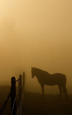 the horse in the mist   (by peet-astn)