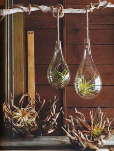 Love these hanging terrariums! I'm totally ordering one