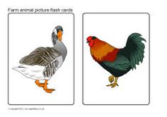 Farm animal picture flash cards