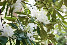 Retkellä Alppiruusupuistossa – Dream of the Day Lifestyle, Plants, Plant, Planets