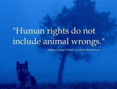 Animals should have greater rights and be protected from abuse. We should encourage vegetarianism and veganism. Don't buy or use leather. Don't eat dead animals. Our society is selfish, eating animals for momentary pleasures. There are other sources of protein than dead animals. We must teach our children when they are young that they have choices not to eat dead animals.