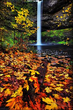Silver Falls State Park, South Falls, Oregon