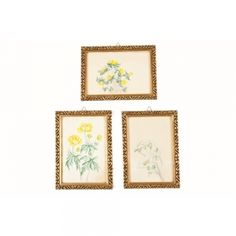 Set of Three Floral Watercolors with Giltwood Picture Frames