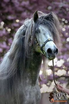 Horse with a tossed hair day, such a pretty mane.
