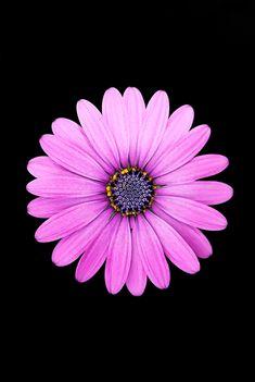 118 Best Amoled Flowers Images Flower Wallpaper Flowers Wallpaper