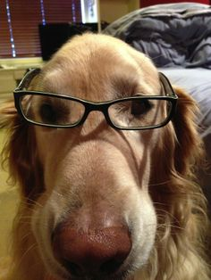 dog with glasses selfie