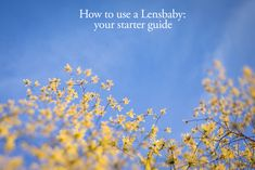 You may be seeing photographers share photos with delicious blur – they very well may have been taken with one of the many Lensbaby lenses. Whether you've never heard of these before, just getting started with yours, or looking for more tips on using a Lensbaby, this post is for you!
