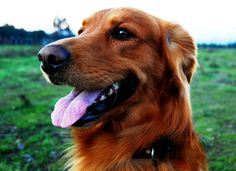 At-Home Dental Care  | #pets #healthypet