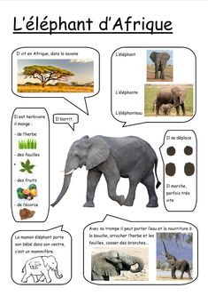 Photo de l'album Fiches - GooglePhotos Preschool Science, Science For Kids, Science And Nature, French Language Lessons, French Lessons, Zoo Activities, Educational Activities, French For Beginners, French Education