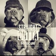 Adopt don't shop #pitbullquotes