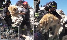 This is the amazing moment Romeo the golden retriever was pulled alive from the rubble!  And people say miracles don't happen.