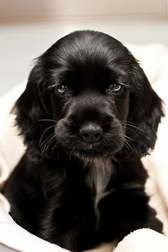 Oh My God!!! This little one is so darn adorable. It makes me want to get a puppy.