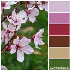 de Haakbaak: Kleur je weekend - bloemtinten kersenbloesem