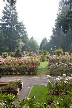 Portland, Oregon rose garden - need to spend some time in Portland instead of driving thru to the coast
