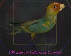 """Check out new work on my @Behance portfolio: """"Ilustración"""" http://be.net/gallery/61920021/Ilustracion"""