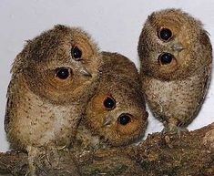 Owls #photography #birds #funny