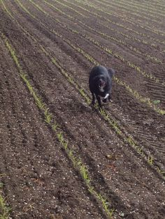 Quick run through the field 29/5/15