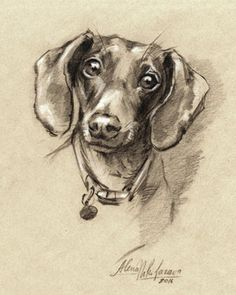 PRINT Dog Dachshund portrait. Doxie-7. Sketch~Drawing by Alena Nikifarava