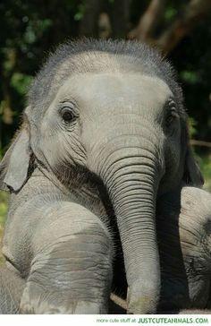 Baby elephant cuteness overload!!!!