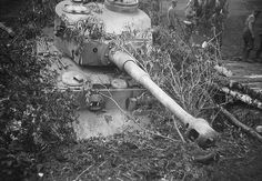 A Tiger 1 dug in fixed position
