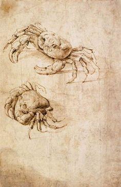 Leonardo da Vinci, Studies of Crabs, Ink on paper. Wallraf-Richartz Museum, Cologne, Germany.