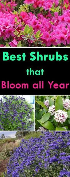 With careful planning and design, you could have your shrubs flowering in your garden all year long. These colorful flowering shrubs can be the focal points in your landscape and the foundation plants of your garden bringing all the wonders of nature Garden Shrubs, Lawn And Garden, Garden Tips, Shade Garden, Garden Web, Balcony Garden, Easy Garden, Garden Plants, Rocks Garden