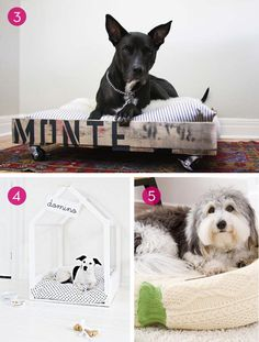 Roundup: 10 Easy DIY Projects For Your Pets and Furry Friends | Curbly