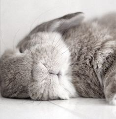 """I can sleep more peacefully than you. Look at my sweet little mouth."" - This Rabbit"