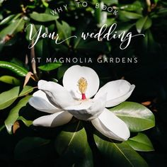 Calling all engaged people out there! Looking for a gorgeous venue to book your big day? You are in luck because TOMORROW @magnoliagardensnwa is having an OPEN HOUSE just for you! We will even have some hot chocolate and coffee to warm you up  please RSVP to eventgroup@nwark.com. ALSO check out our most recent blog post for a list of reasons why Magnolia Gardens is an ideal place for your Big Day! link in profile . . . . #eventgroupcatering #catering #cater #nwa #weddingvenue #venue #wedding…