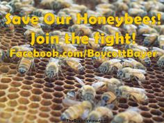 Save Our #Honeybees & like www.Facebook.com/BoycottBayer
