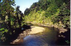New Zealand Abel Tasman Walk 987