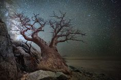 Beth Moon, from photography book Ancient Trees Ancient Skies.