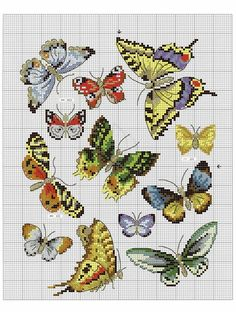Gallery.ru / Фото #40 - Oiseauz, papillons et petites betes - Chispitas