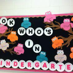 """""""look who's in Kindergarten"""" owl themed back to school bulletin board."""