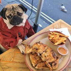 """""""When u just wanna take a photo of ur food but someone keeps getting in the shot"""" -Doug Doug The Pug, Lollapalooza, Cosmopolitan, Pug Accessories, Nashville, Pugs In Costume, Sweet Dogs, Baby Pugs, Pug Art"""