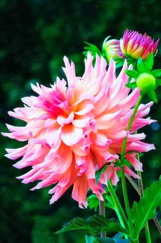 Things That Great: 5 Most beautiful flowers
