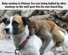 Animals could save anybody