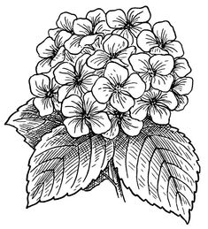 Art Drawing Images, Flower Art Drawing, Bunch Of Flowers Drawing, Flower Coloring Sheets, Coloring Pages For Girls, Hydrangea Flower, Simple Flowers, Flower Images, Easy Drawings