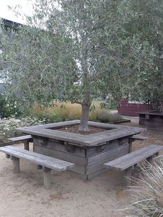 Cowgirl Creamery - Point Reyes, CA, United States. Cool picnic tables built around olive trees.