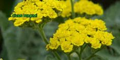 aktar,baharat,şifalı bitkiler | Yemyeşil Aktar Baharat Baby Knitting Patterns, Herbs, Plants, Aspirin, Flats, Herb, Plant, Planets, Medicinal Plants
